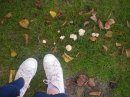 feet-with-toadstools